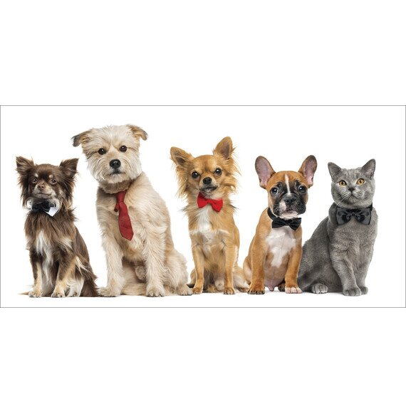 Kutya-macska barátság pamut törölköző 70x140 cm