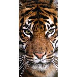 Tigris pamut törölköző 70x140 cm